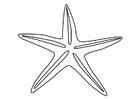 Disegno da colorare stella marina