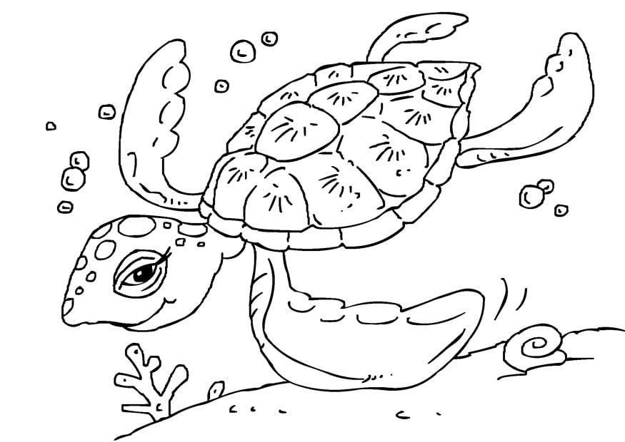 Disegno da colorare tartaruga di mare cat 27229 for Immagini mare da colorare per bambini