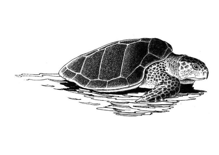 Disegno da colorare tartaruga di mare cat 8573 for Immagini di mare da colorare