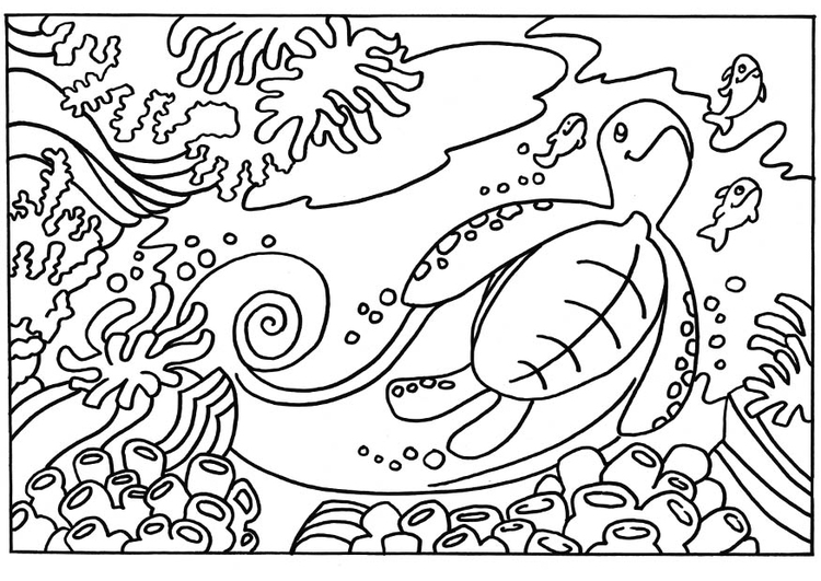 disegno da colorare tartaruga  disegni da colorare e