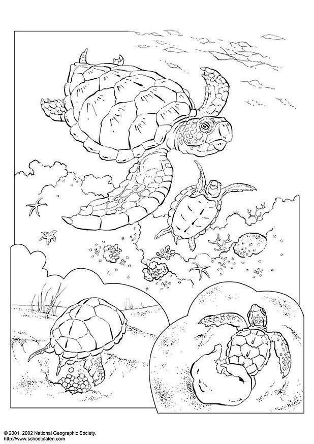 Disegno Da Colorare Tartaruga Marina Cat 3083 Images