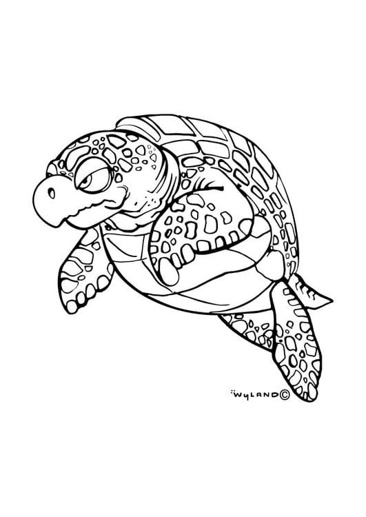 disegno da colorare tartaruga marina