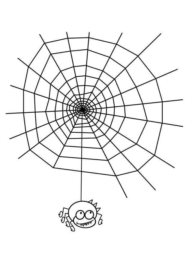 Disegno da colorare tela di ragno cat 19058 - Immagini del ragno da stampare ...