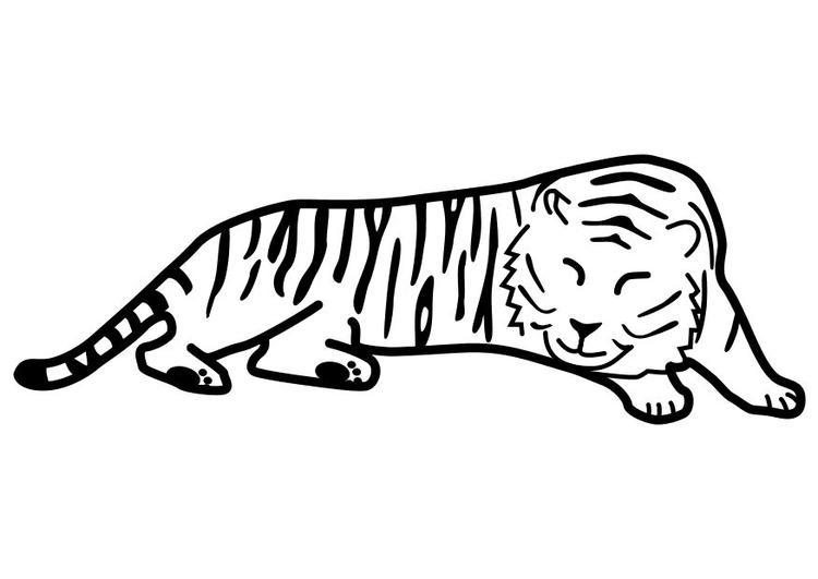 Disegno Da Colorare Tigre Che Dorme Cat 10489 Images