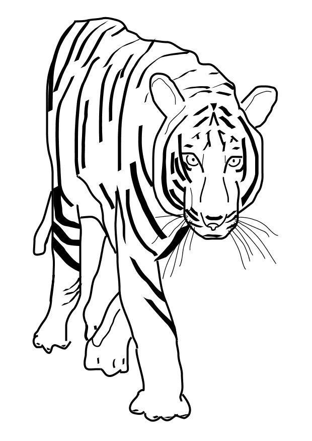 Disegno Da Colorare Tigre Cat 10101
