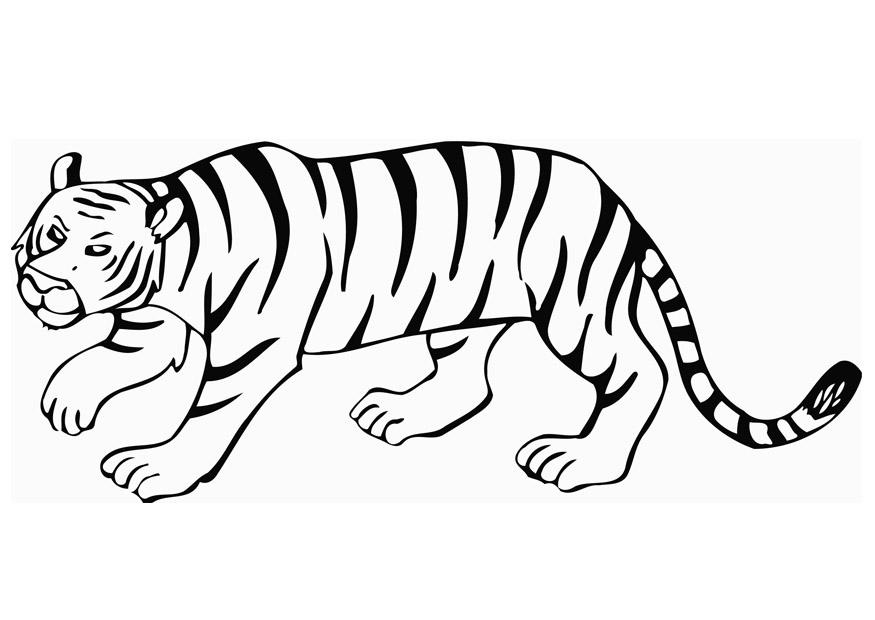 Someone drinking water drawing together with 187381 moreover Animal Outlines Templates furthermore How To Draw Thor And Loki Step 19 additionally Disegno Da Colorare Tigre I12849. on safari cartoon drawings