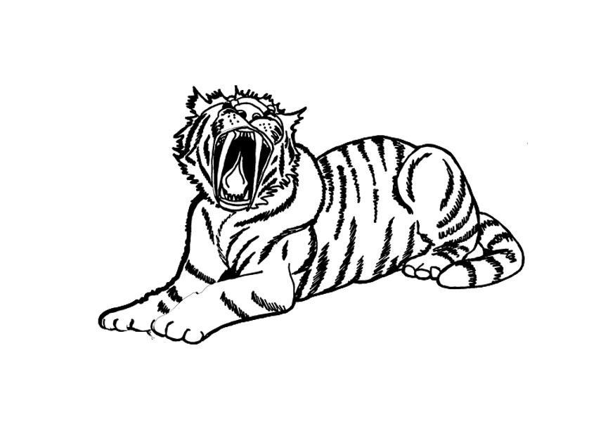 Disegno Da Colorare Tigre Cat 9695