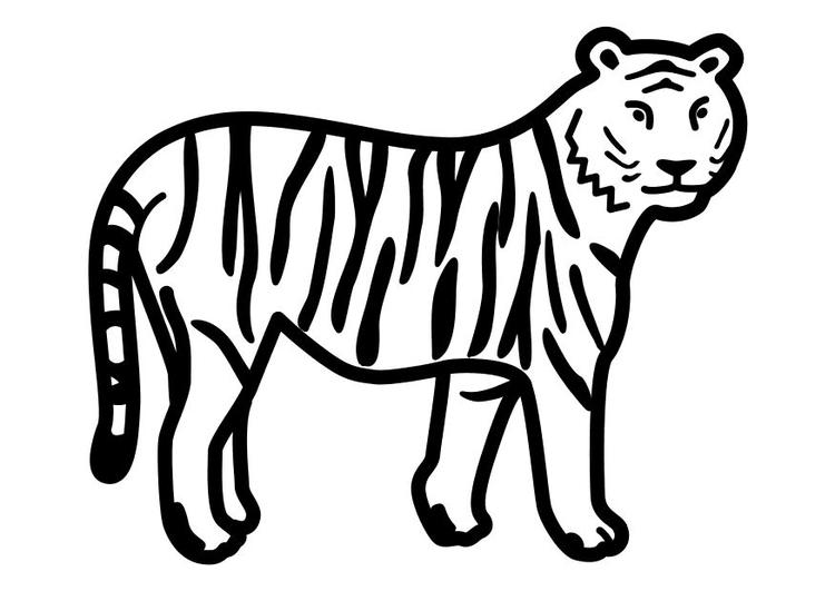 Disegno Da Colorare Tigre Ferma Cat 10491 Images