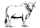 Disegno da colorare toro - Bahman