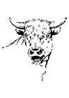 Disegno da colorare toro