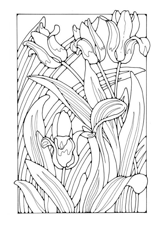 disegno da colorare tulipani  disegni da colorare e