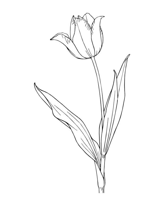 Disegno da colorare tulipano cat 13832 - Dessin de tulipe a imprimer ...