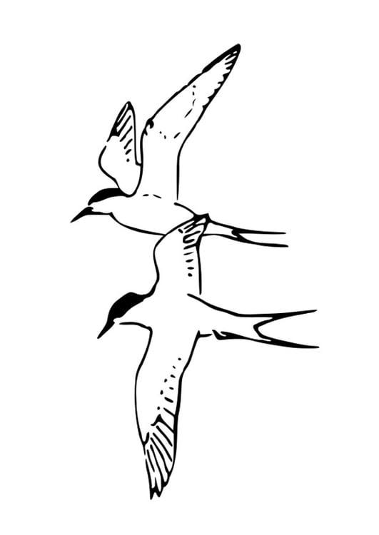 Disegno Da Colorare Uccelli Cat 19056 Images