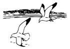 Disegno da colorare uccelli - gabbiani argentari