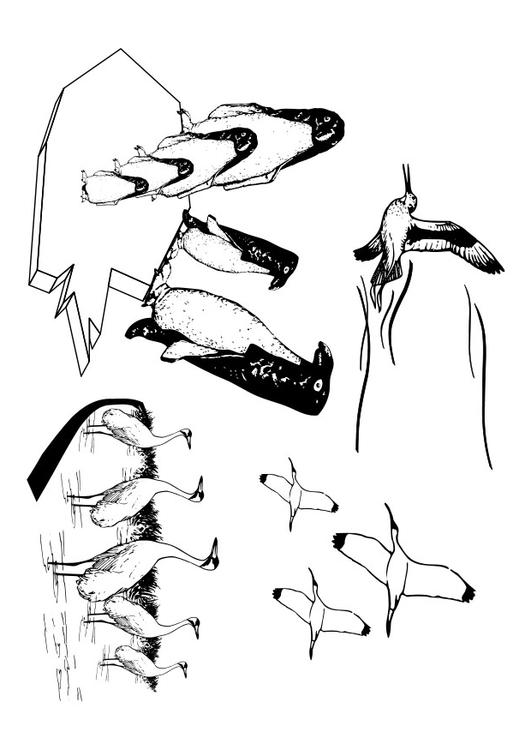Disegno da colorare uccelli marini cat 27326 for Disegni marini da stampare