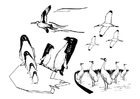 Disegno da colorare uccelli marini