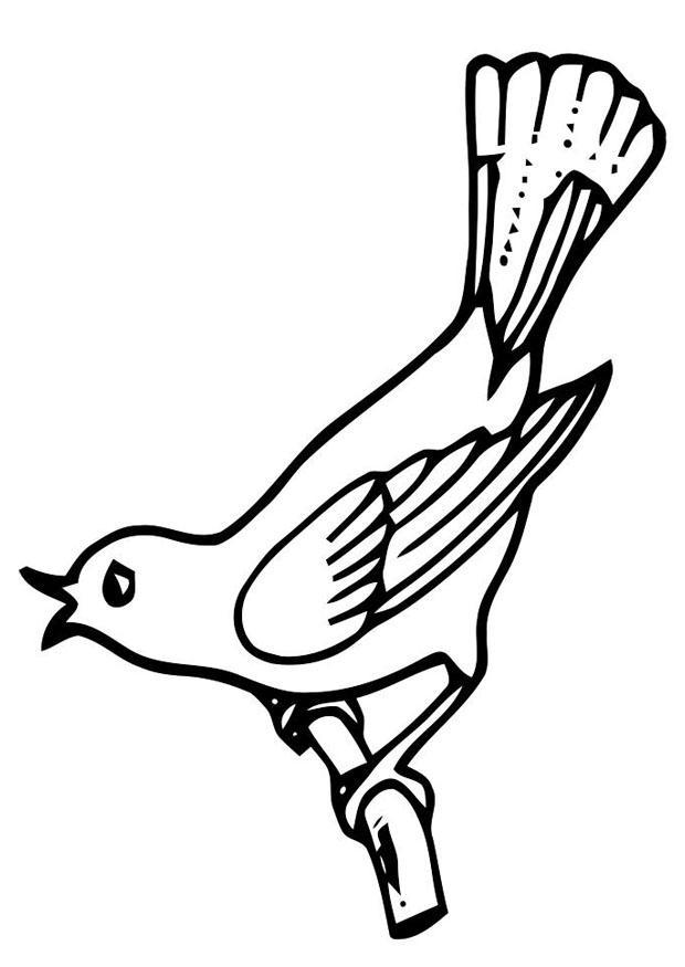 Disegno Da Colorare Uccellino Canterino Disegni Da Colorare E