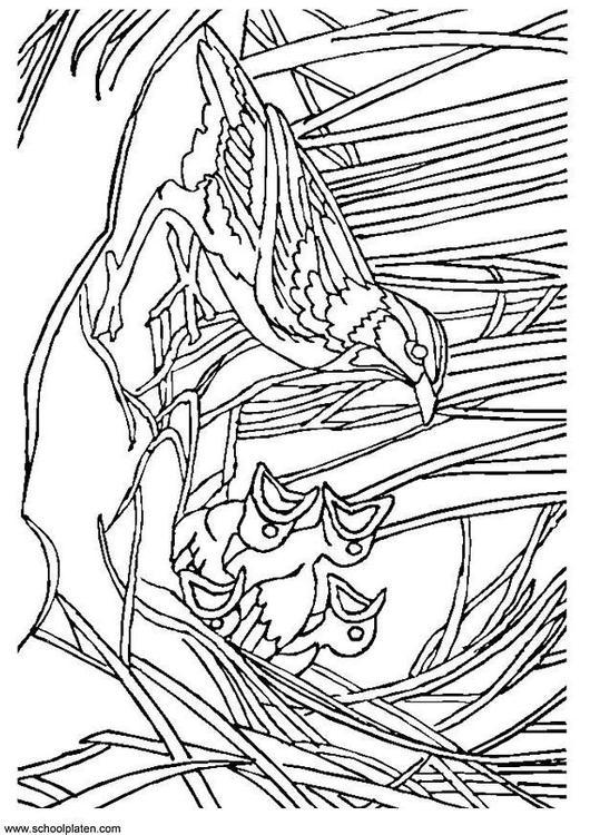 Disegno Da Colorare Uccellino Con Nido Cat 3404