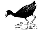Disegno da colorare uccello - gallinella porpora