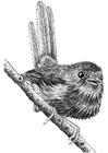 Disegno da colorare uccello