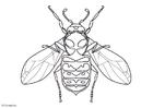 Disegno da colorare vespa