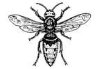 Disegno da colorare vespa - tafano
