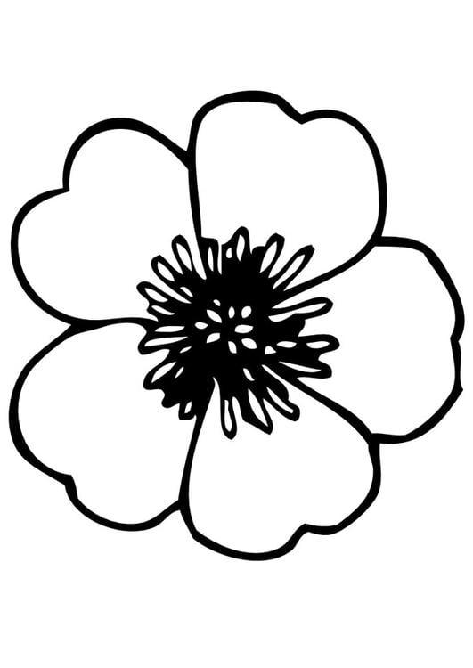 Disegno Da Colorare Viola Del Pensiero Cat 11736