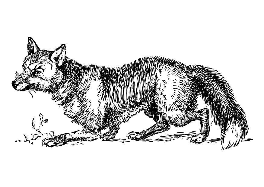 Disegno da colorare volpe cat 17330 for Disegni di zorro da colorare per bambini