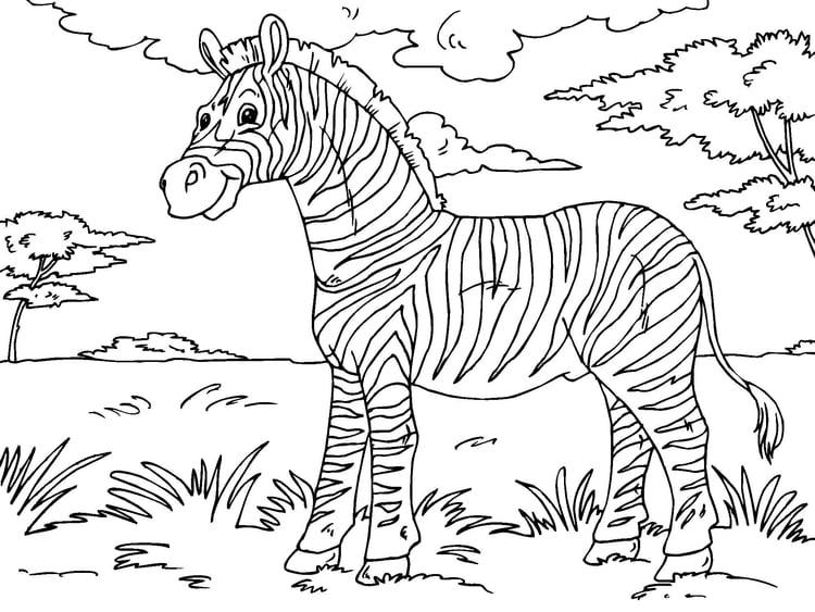 Disegno Da Colorare Zebra Cat 23013 Images