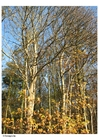 Foto alberi - autunno
