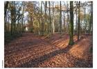 Foto autunno nella foresta