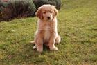 Foto cane - cucciolo