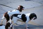 Foto cani al guinzaglio