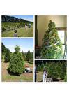Foto comprare l'albero di Natale