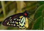 Foto farfalla
