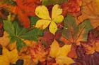 Foto foglie autunnali