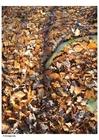 Foto foglie d'autunno