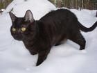 Foto gatto nero