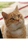 Foto gatto