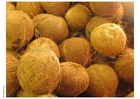 Foto noce di cocco