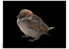 Foto passero