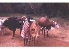 Foto pastore in Kenia