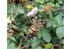 Foto ragno con preda