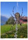 Foto ragno nella tela