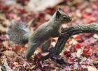 Foto scoiattolo giapponese