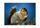 Foto scoiattolo