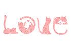 immagine amore - gatti