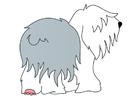 immagine cane - bobtail