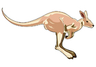 immagine canguro