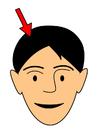 immagine capelli